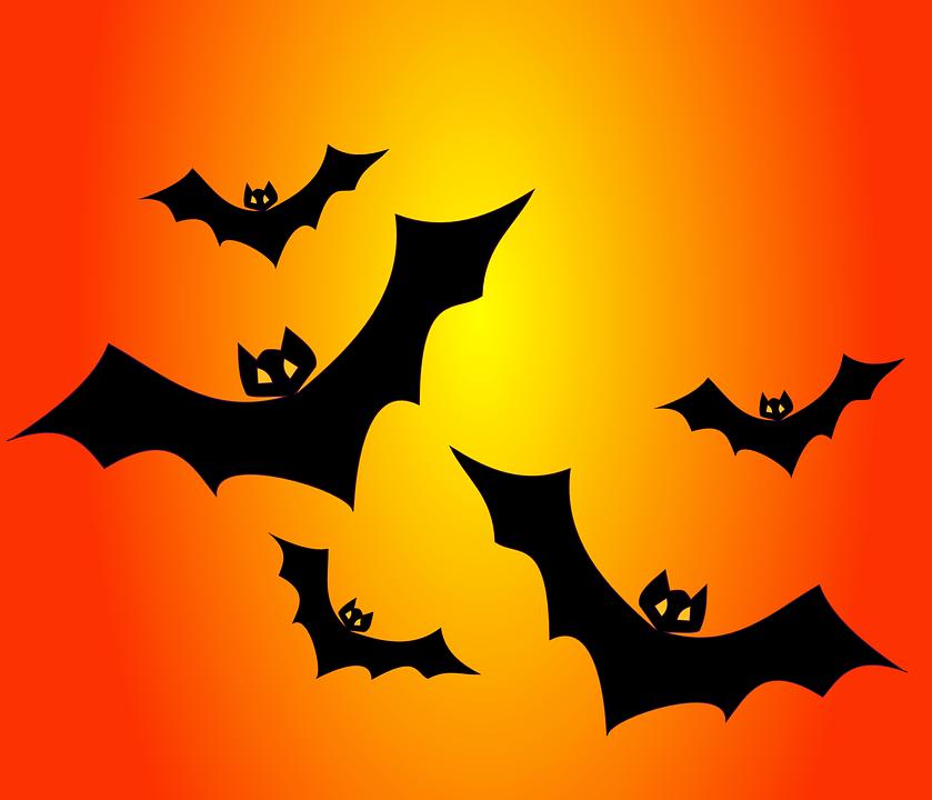 bats-151206_960_720